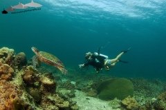 Diver and turtle2