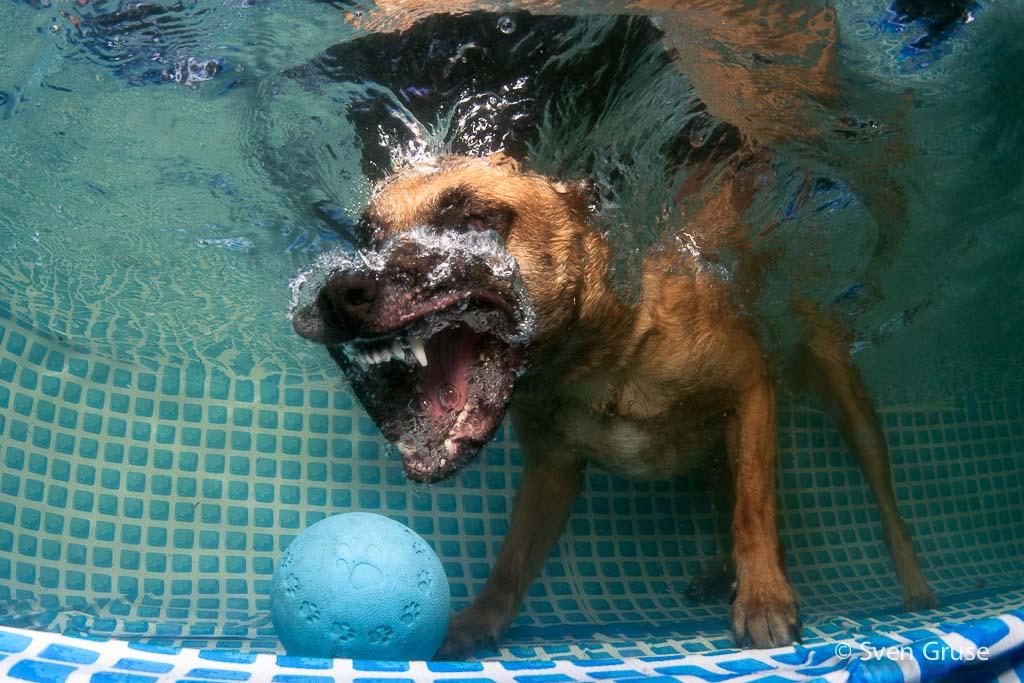 Hunde unter Wasser