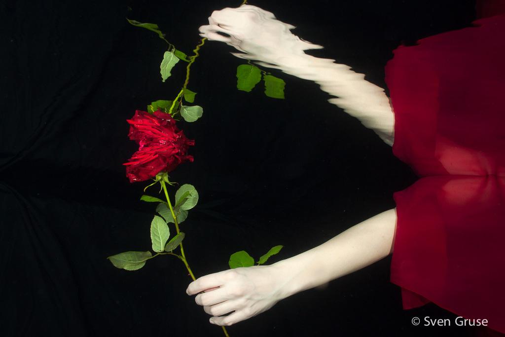 Rose unter Wasser