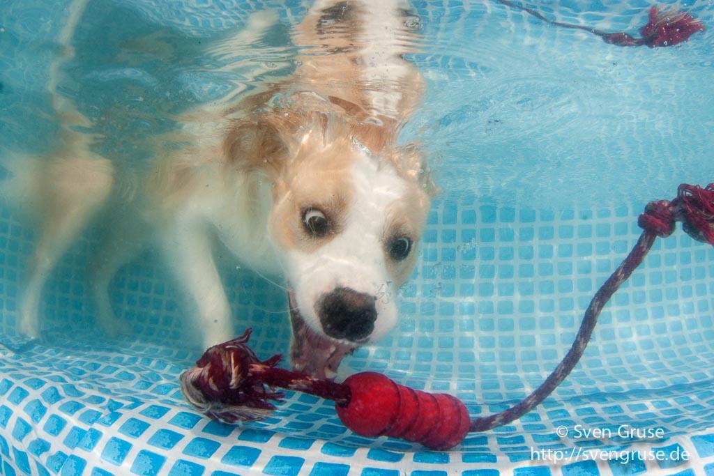 Fotoshooting Hunde Unter Wasser 26. August 2017